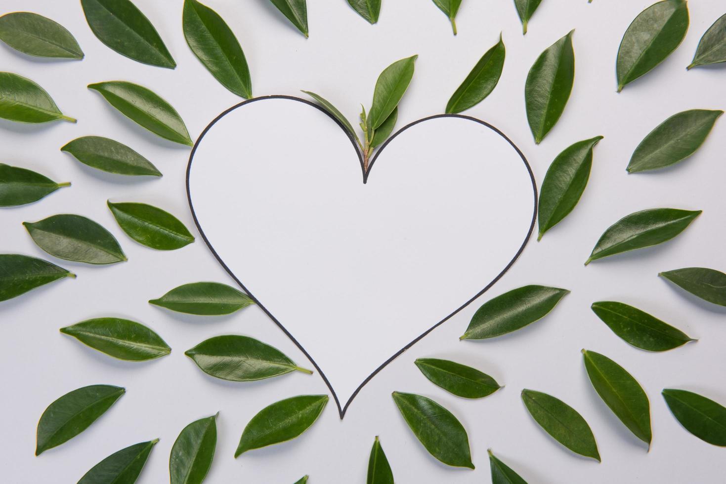 foglie su sfondo bianco con spazio per il testo foto