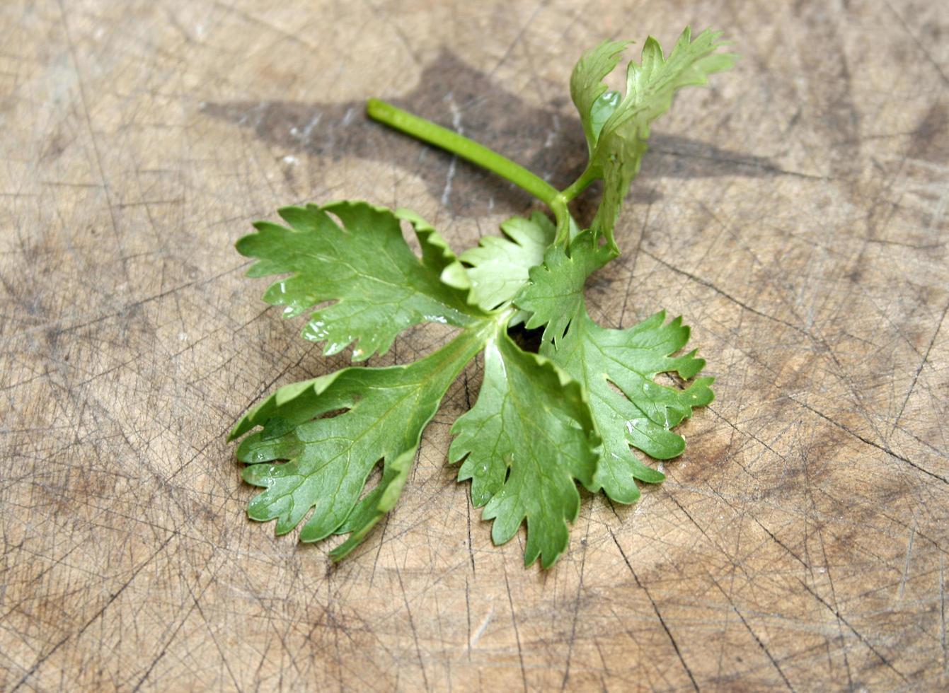 foglie di coriandolo su legno foto