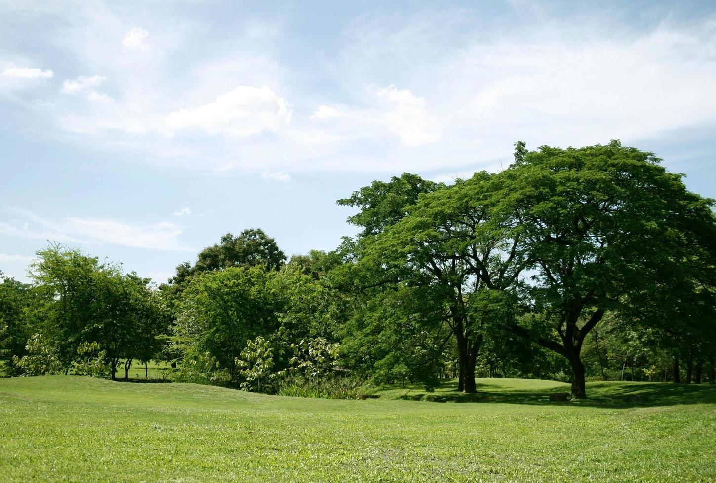 idilliaca erba verde e alberi foto