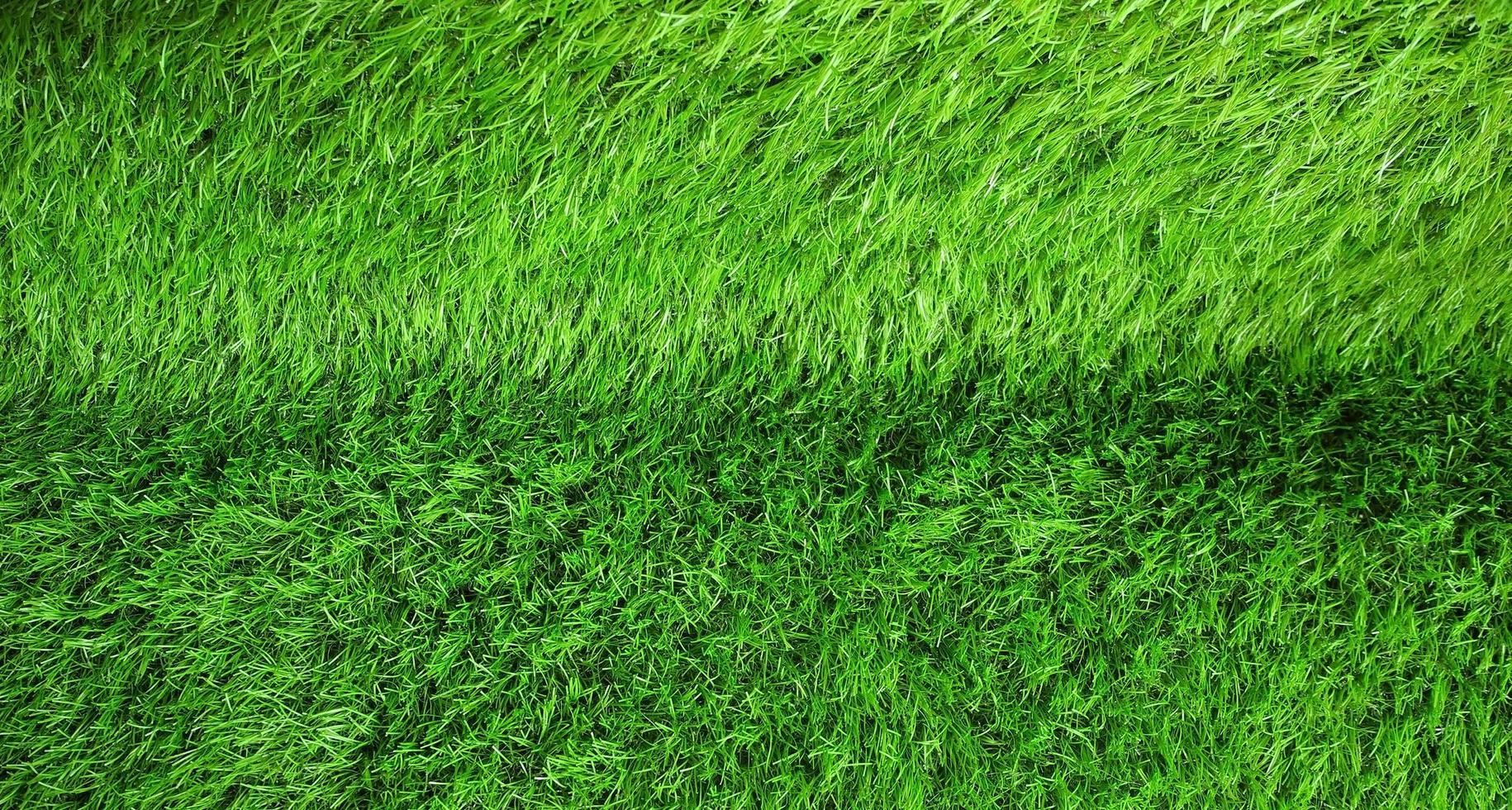 erba verde lussureggiante foto