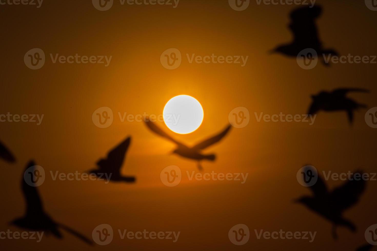 sagome di uccelli sfocate al tramonto foto