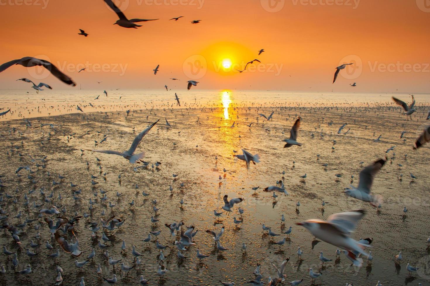gabbiani che volano al tramonto foto
