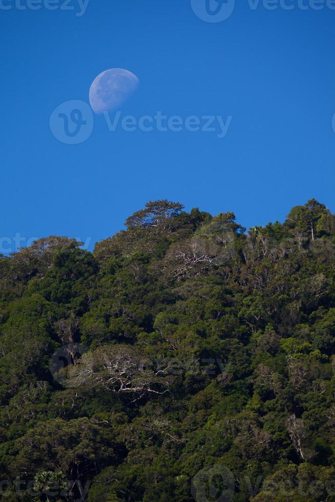 luna sopra gli alberi foto
