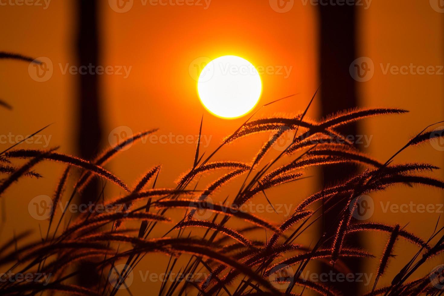 campo di erba all'alba foto