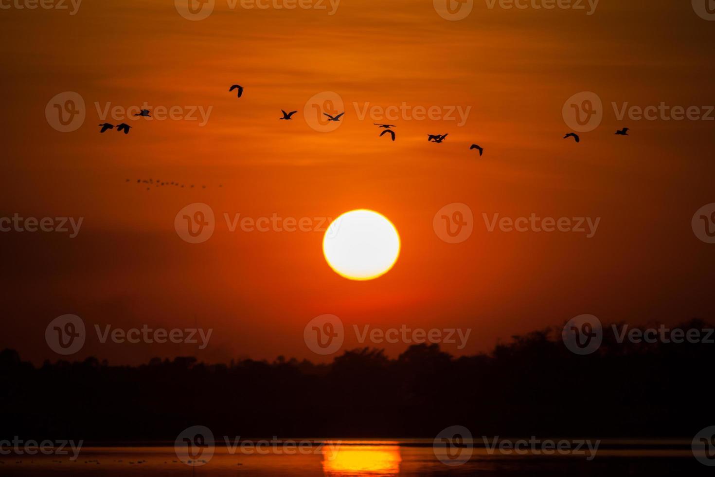 stormo di uccelli che volano al tramonto foto