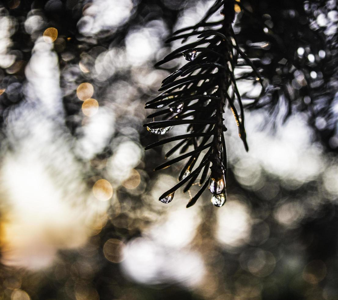 retroilluminato gocce d'acqua su un ramo con sfondo sfocato del cielo foto