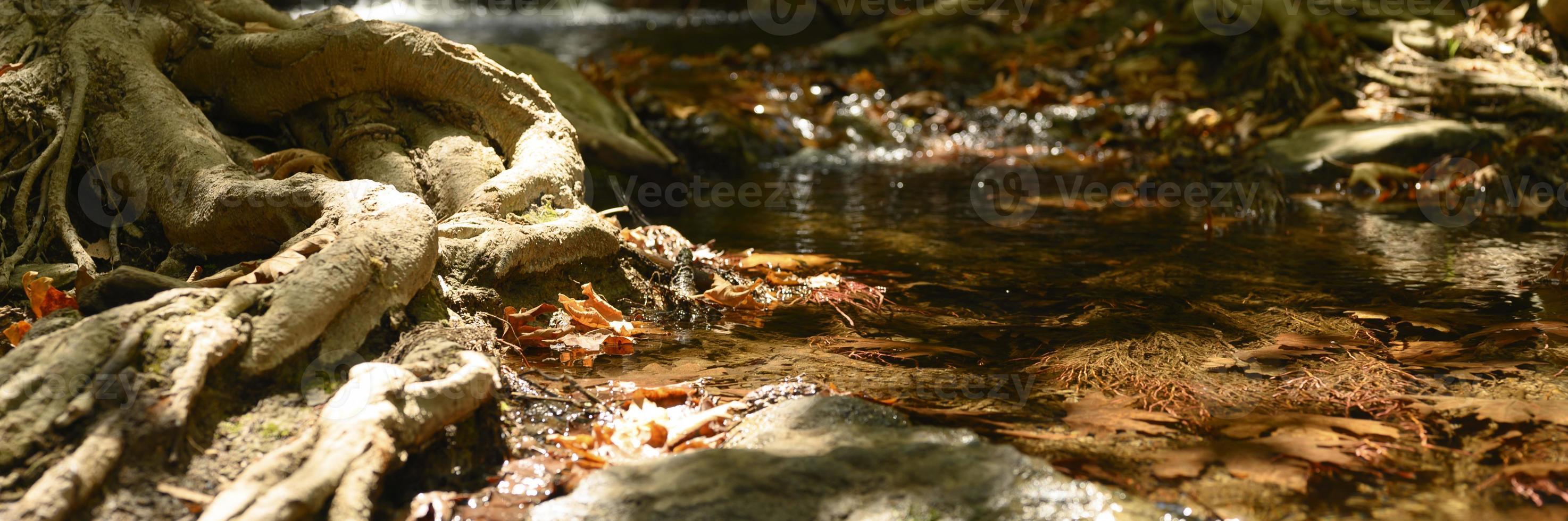 un ruscello che attraversa le radici nude degli alberi in una rupe rocciosa e le foglie autunnali cadute foto