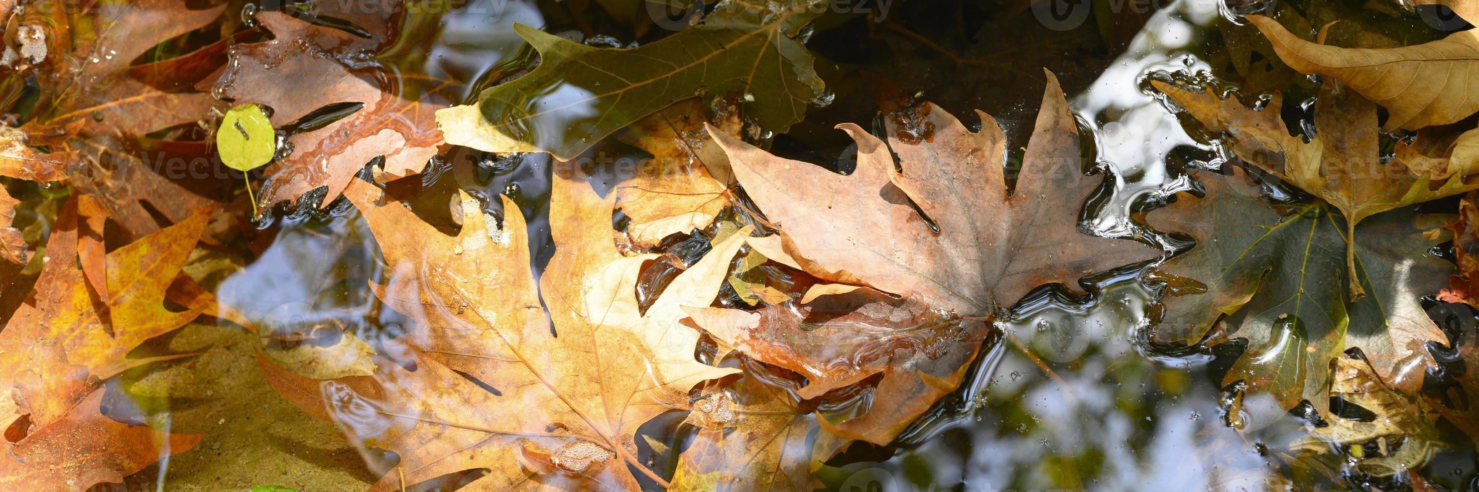 mucchio di foglie di acero autunno cadute bagnate in acqua e rocce foto