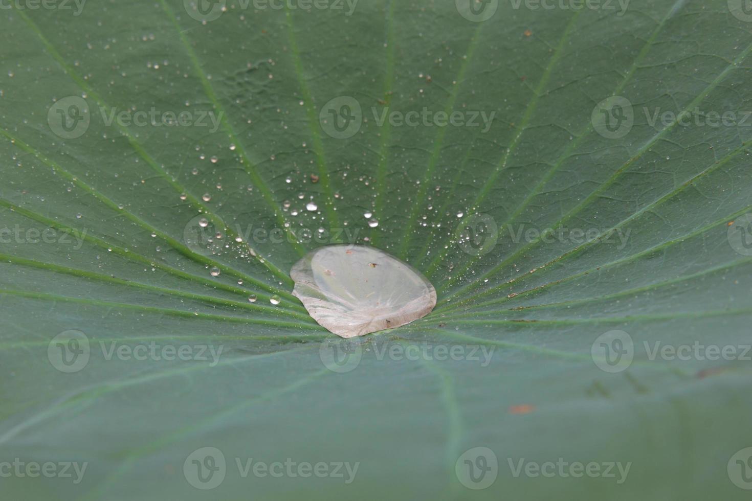 gocce d'acqua sulle foglie foto
