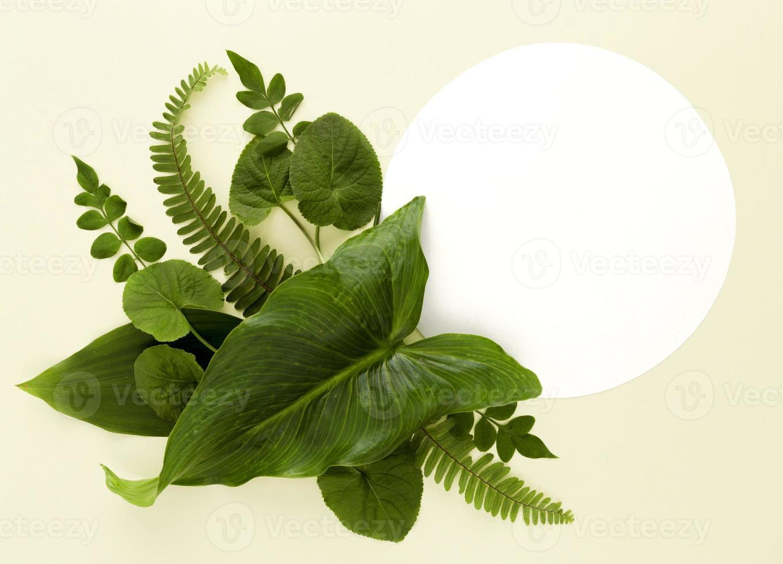 assortimento di foglie piatte foto
