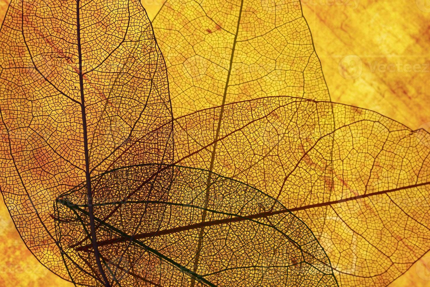 vista frontale arancione foglie trasparenti foto