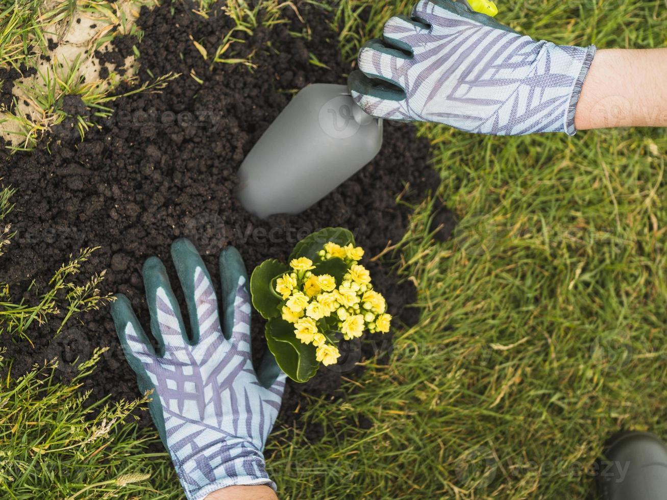 giardiniere che pianta piante succulente nel terreno foto