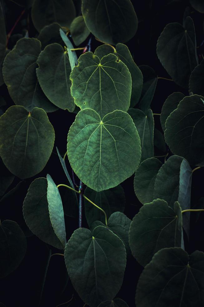 foglie di piante verdi nella stagione primaverile, sfondo verde foto
