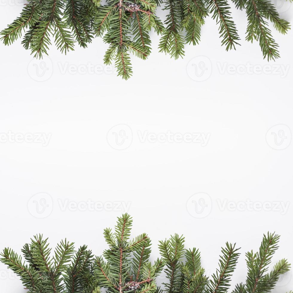 rami di conifere isolati su priorità bassa bianca foto