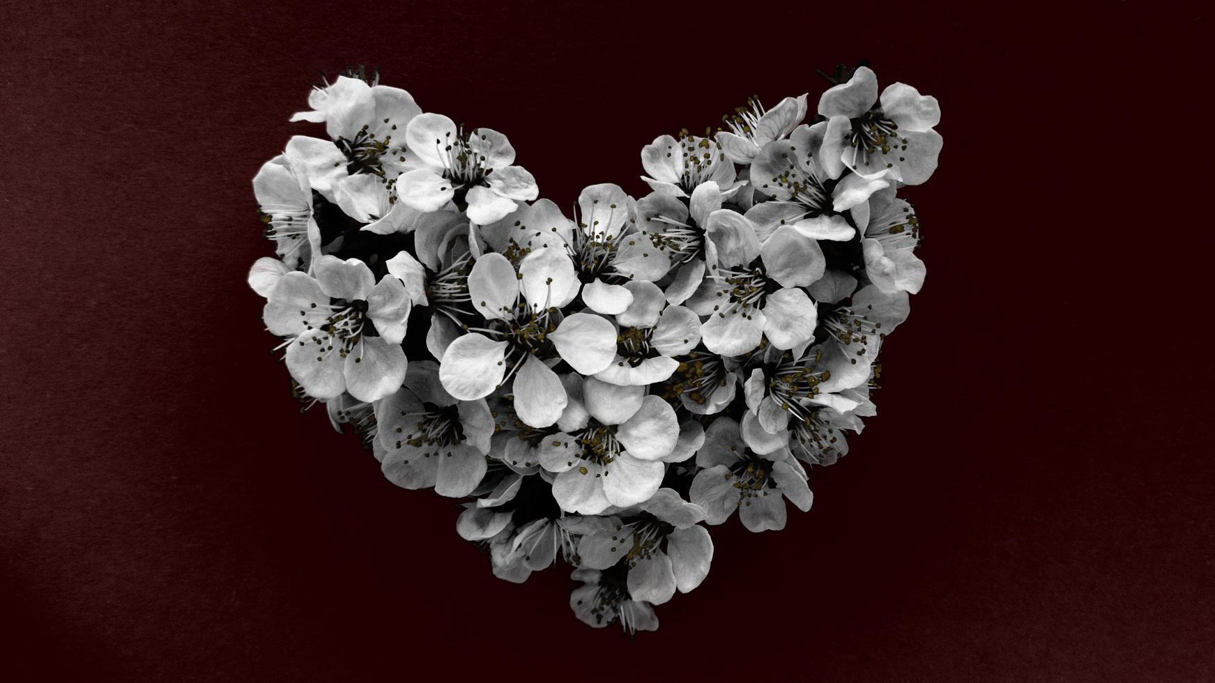 cuore di fiori di susino in colori monocromatici su sfondo rosso scuro. può essere utilizzato come banner, cartolina, stampa di immagini, design di inviti. foto d'archivio.