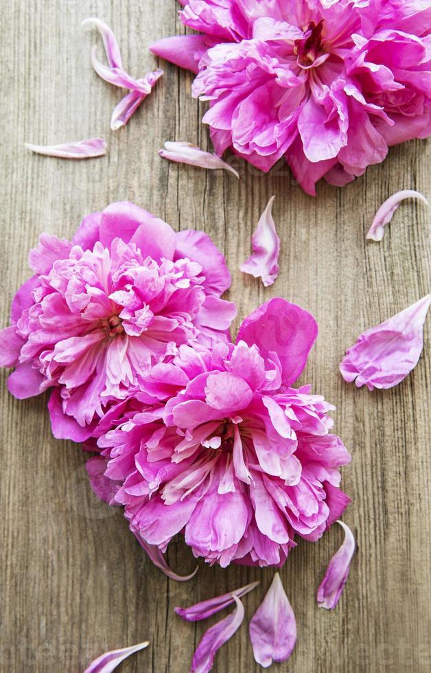 fiori di peonia rosa su legno foto