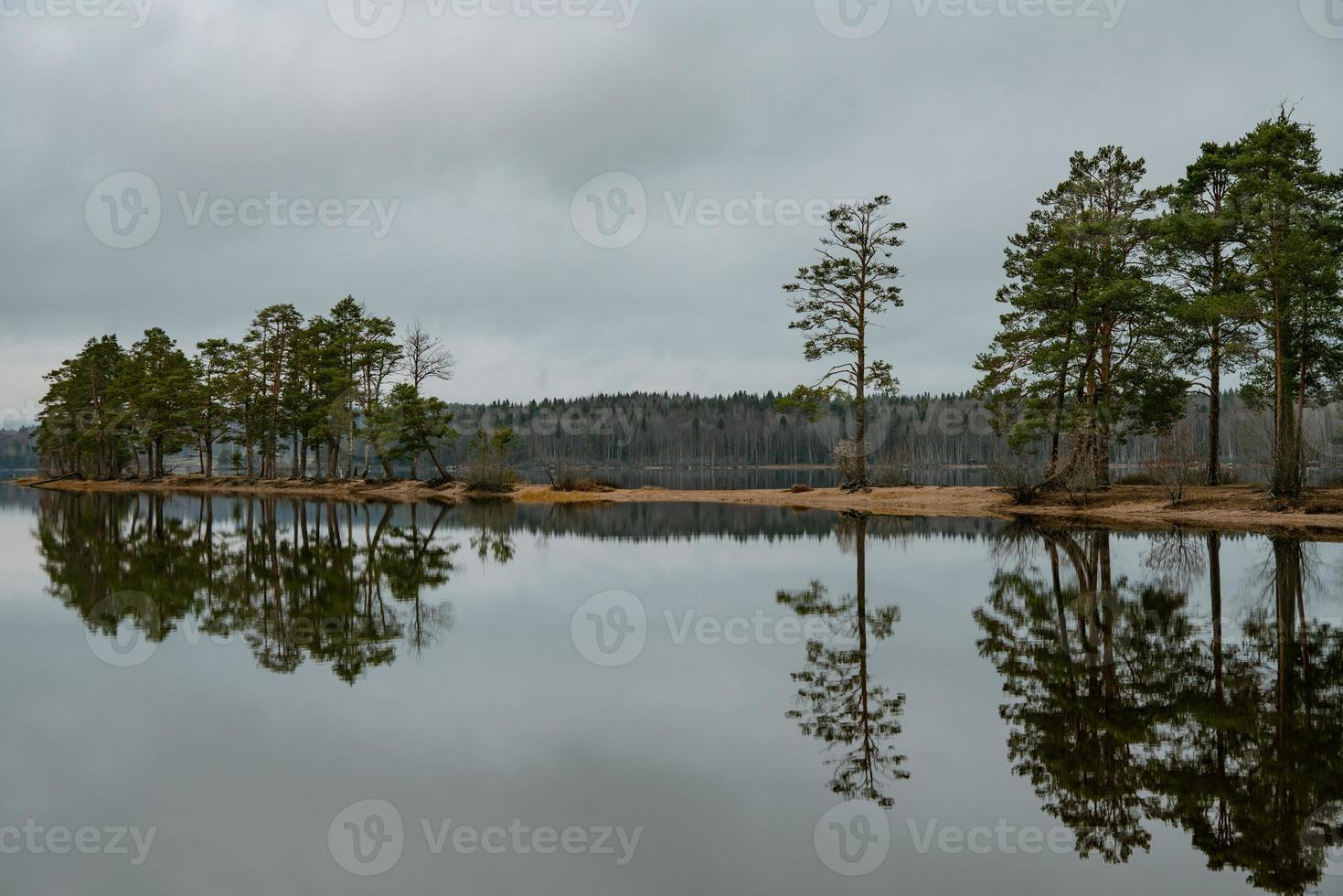 alberi di pino con un piccolo lago foto