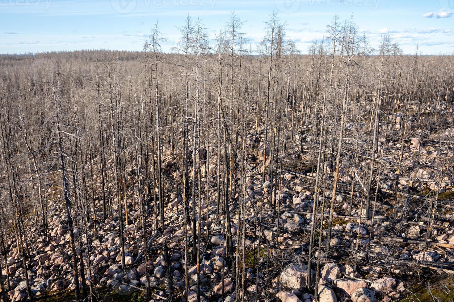 foresta morta dopo un incendio boschivo foto