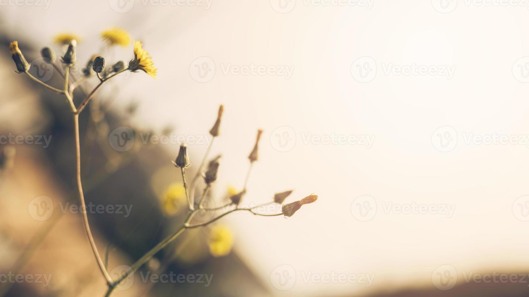 primo piano fiore giallo con gemma foto