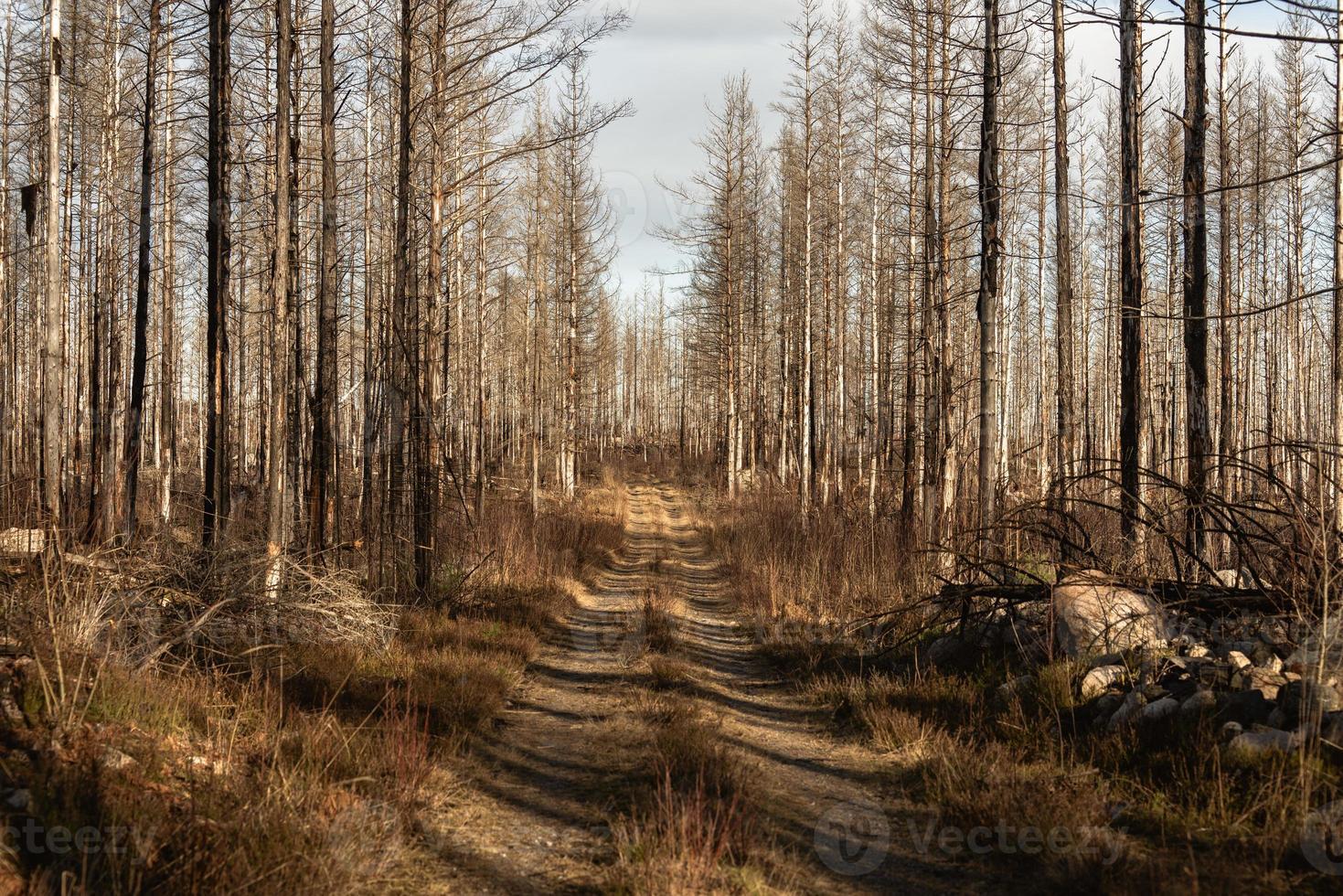 strada sterrata in una foresta invernale foto