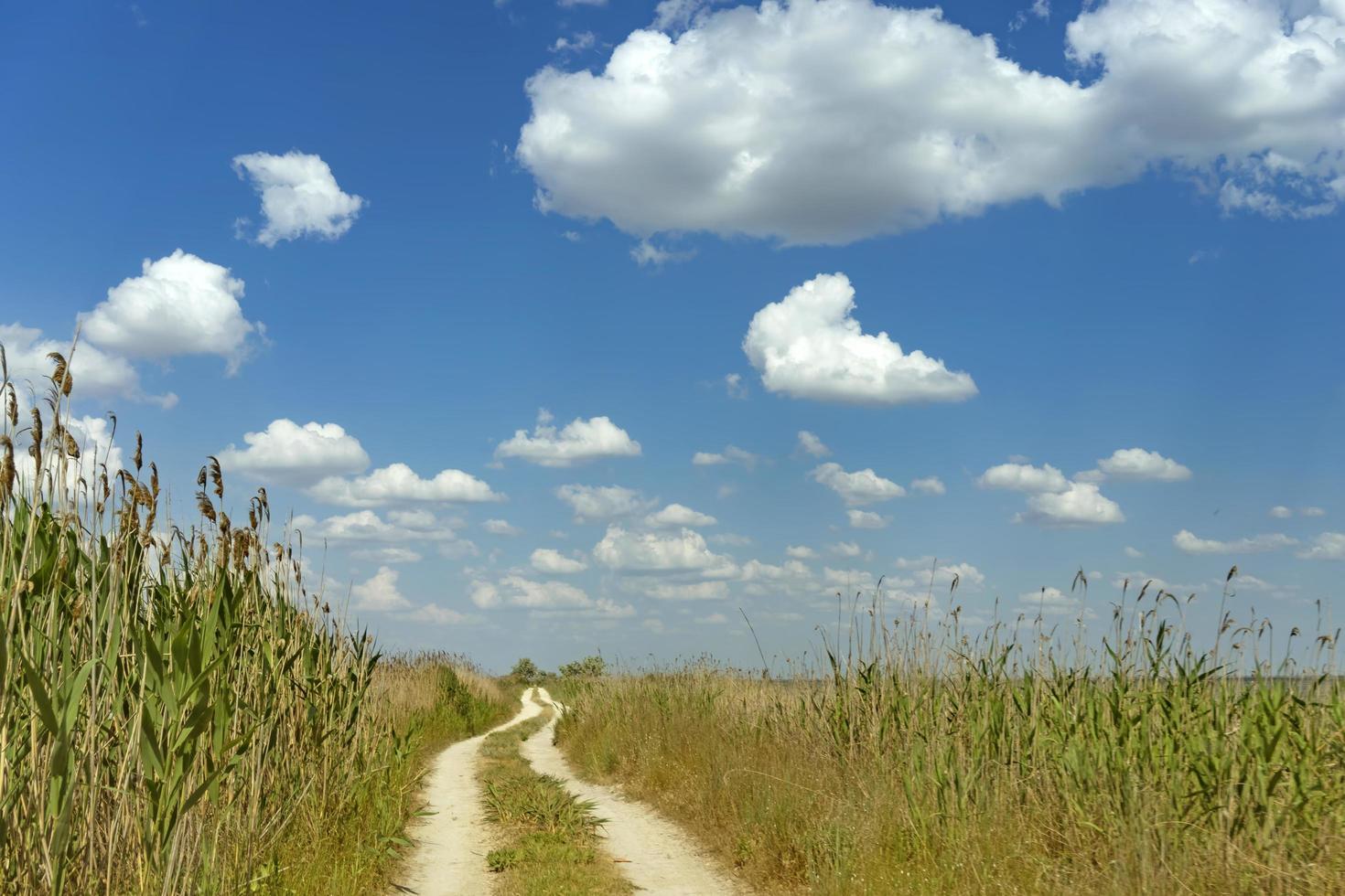 strada sterrata in mezzo a canne sotto il cielo azzurro. foto
