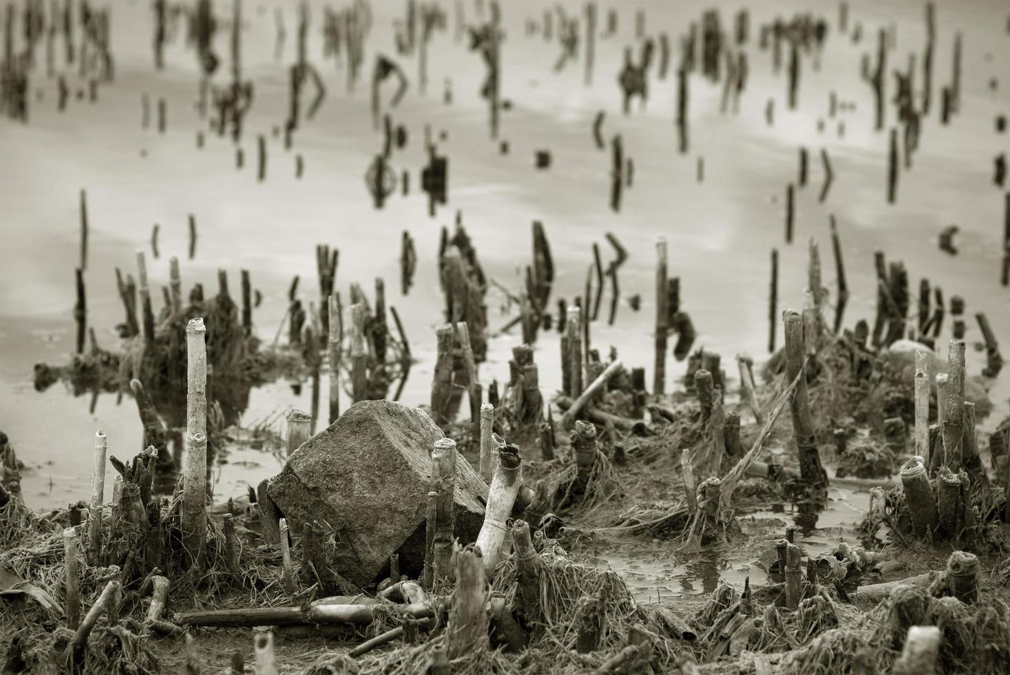steli secchi in riva al lago foto