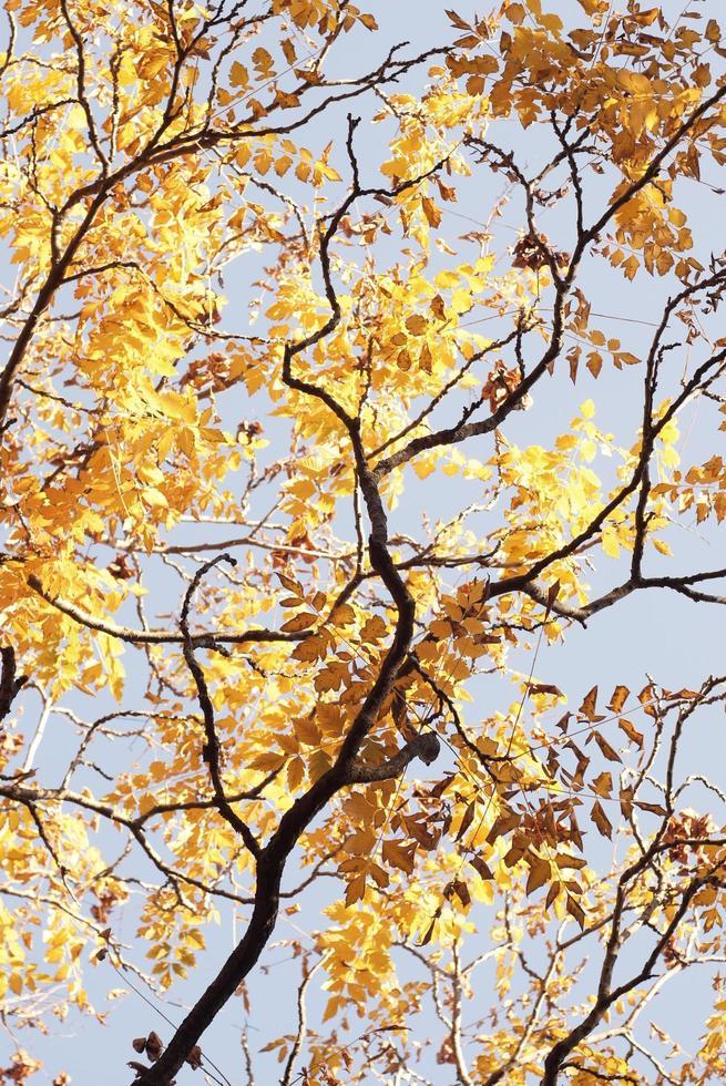 bellissimo bosco autunnale con foglie gialle foto