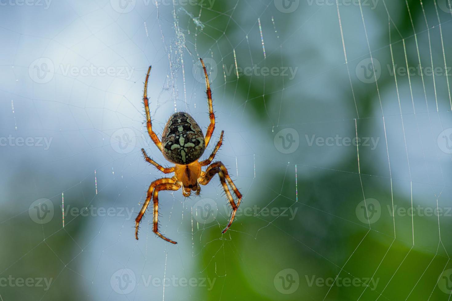 ragno da giardino sul suo web durante il giorno foto