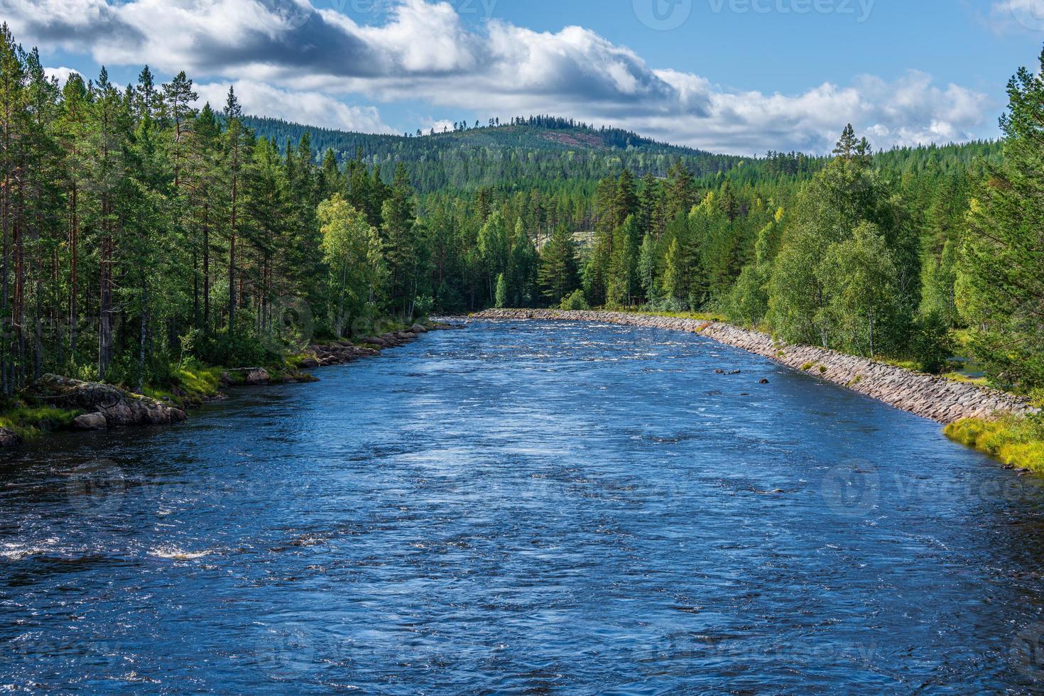 fiume che attraversa una foresta foto