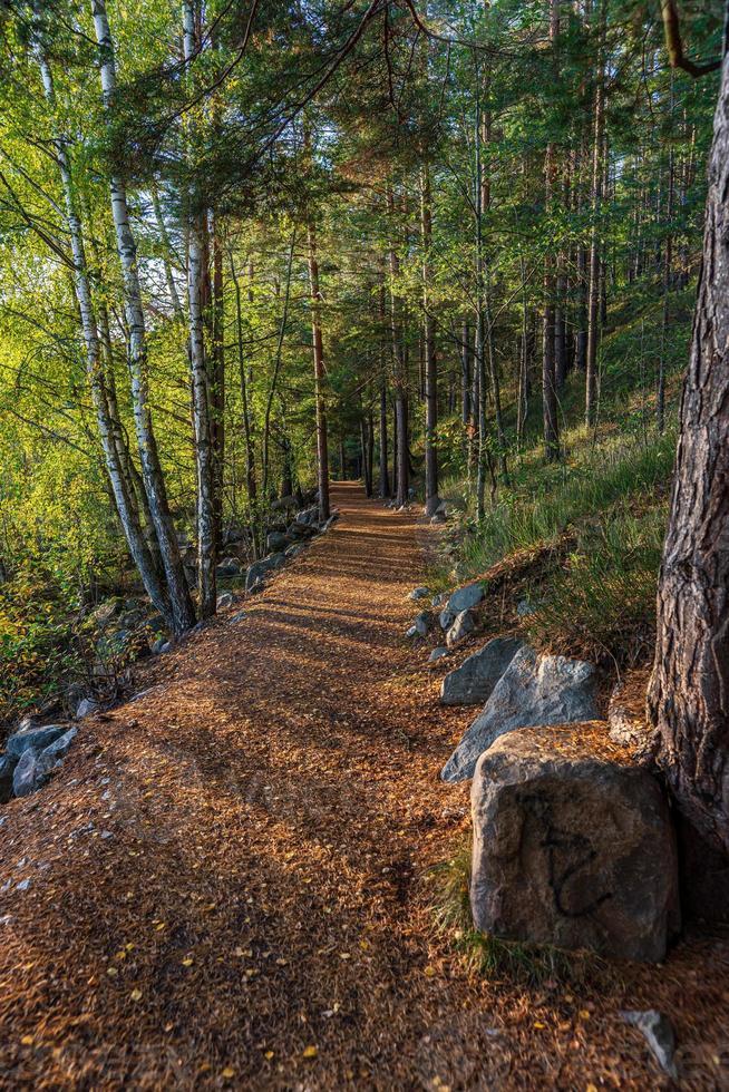 percorso a piedi in una foresta in Svezia foto