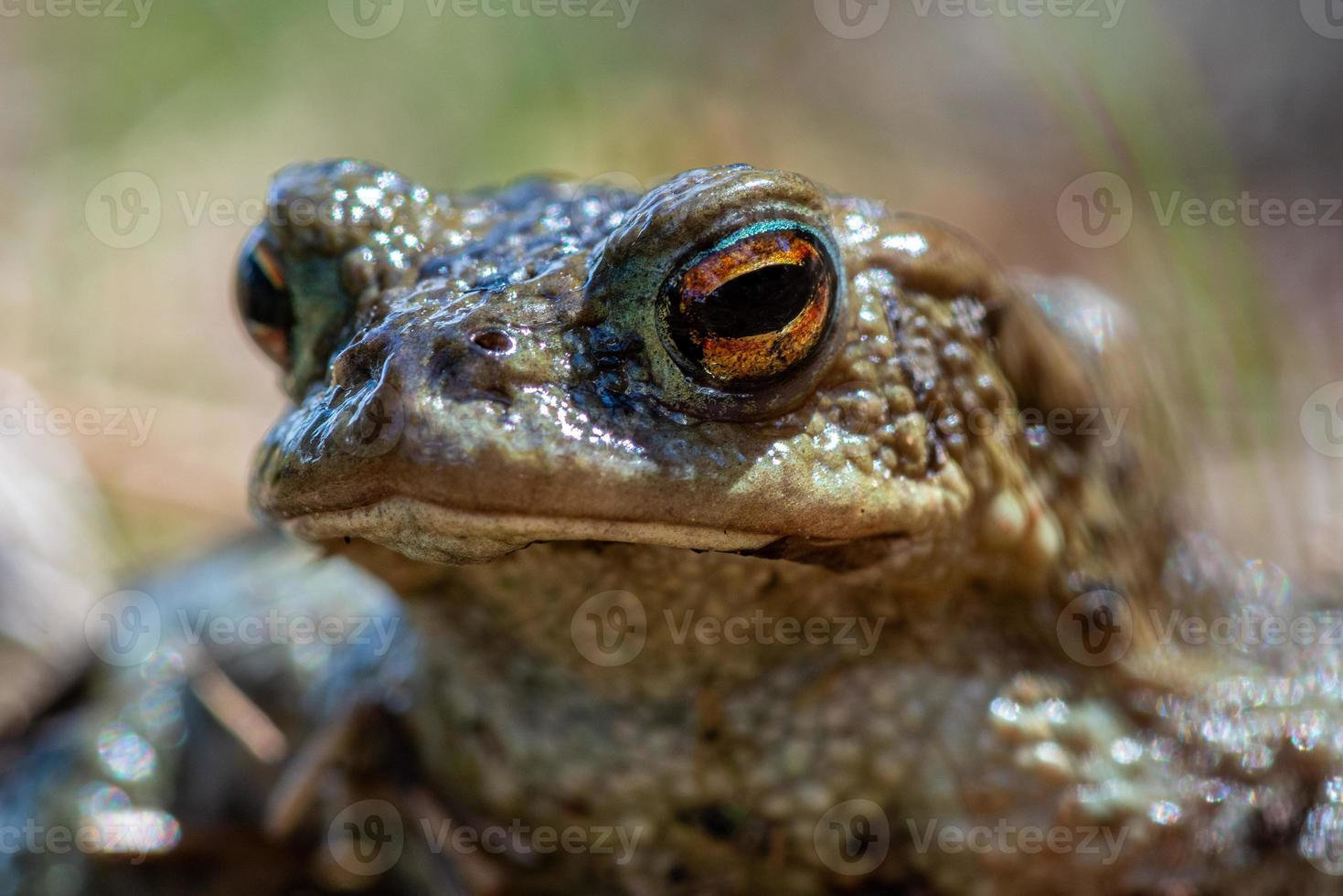 dettagliata ravvicinata di una rana verde maculata alla luce del sole foto