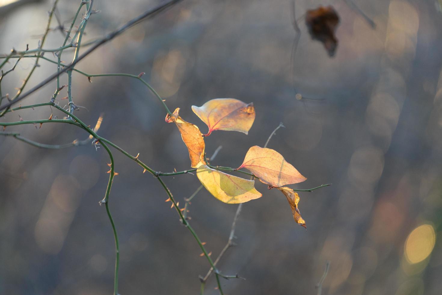 astratto sfondo sfocato con un ramo e una foglia in una luce sagomata. foto
