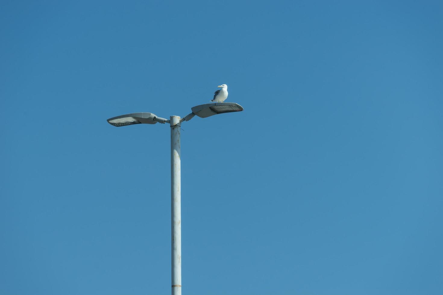 Gabbiano di mare seduto su un lampione sullo sfondo del mare blu foto