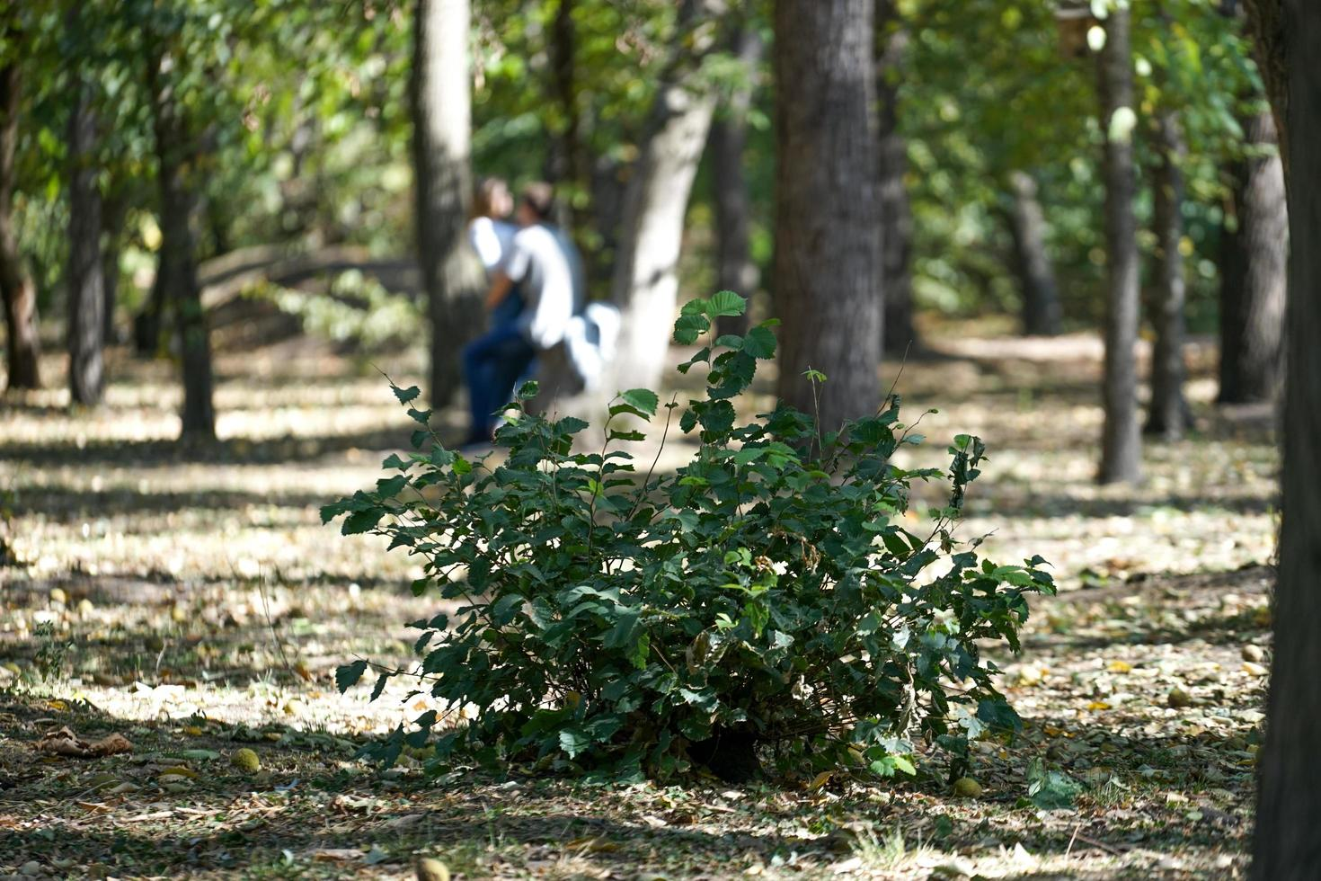 il cespuglio verde nel parco su uno sfondo di alberi foto