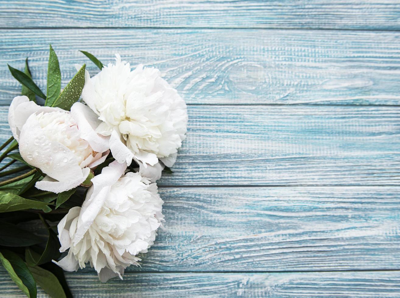 fiori di peonia su uno sfondo di legno blu foto