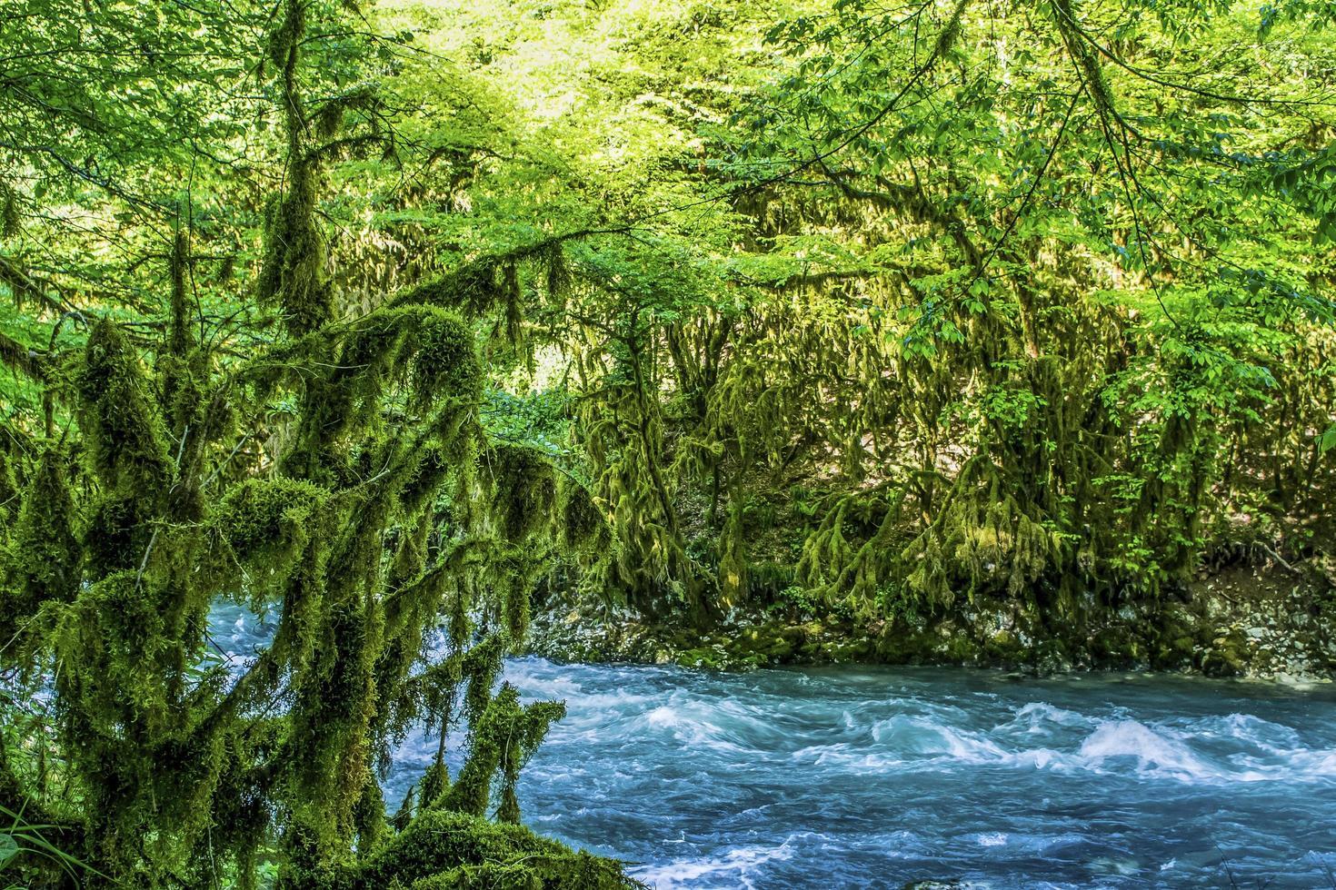 paesaggio con un turbolento fiume di montagna foto