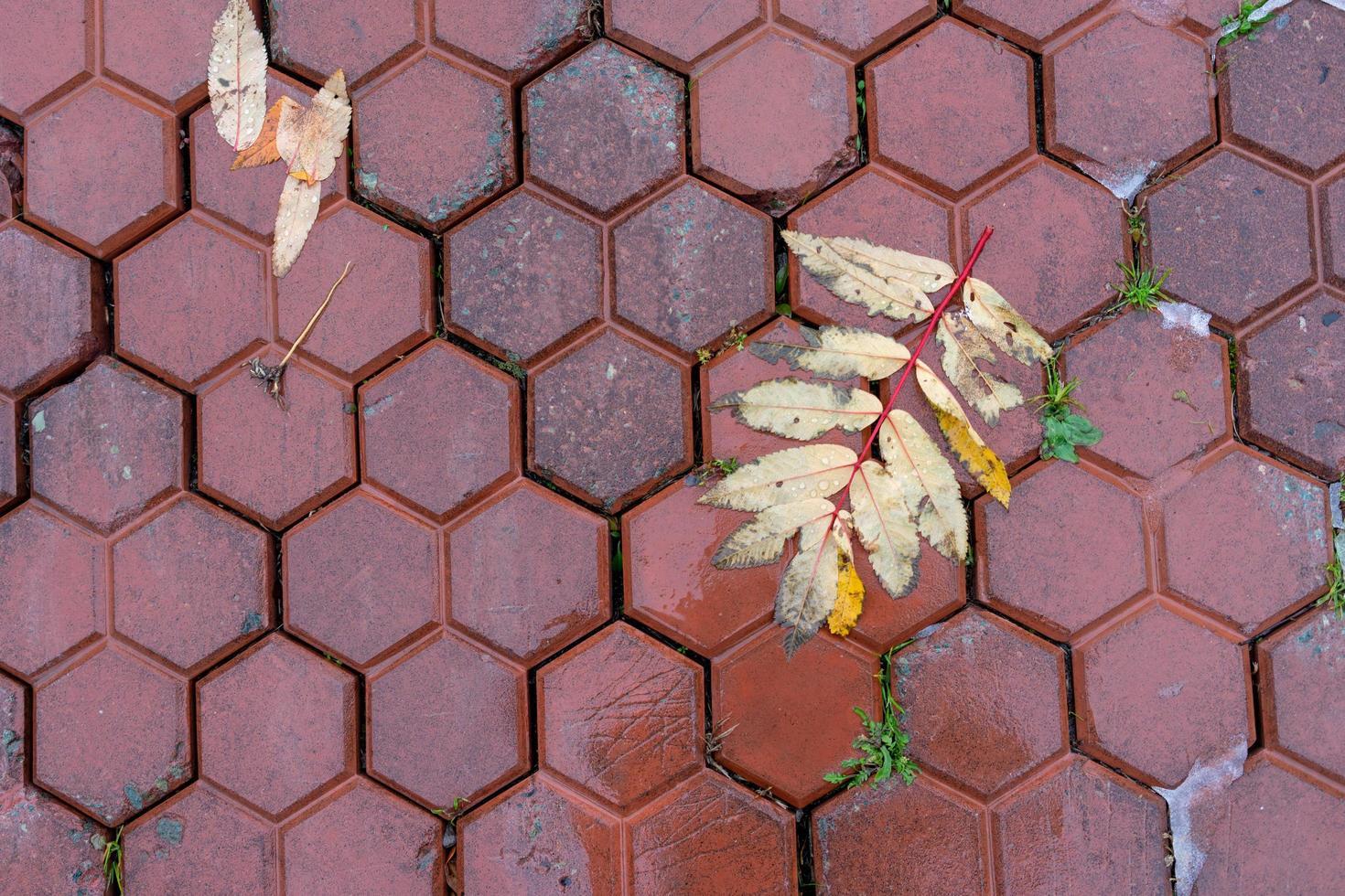 sfondo con foglie di cenere di montagna su un marciapiede rosso bagnato. foto