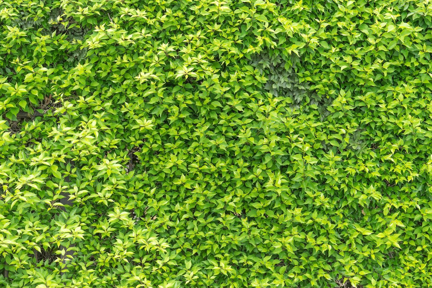 sfondo naturale di foglie verdi foto