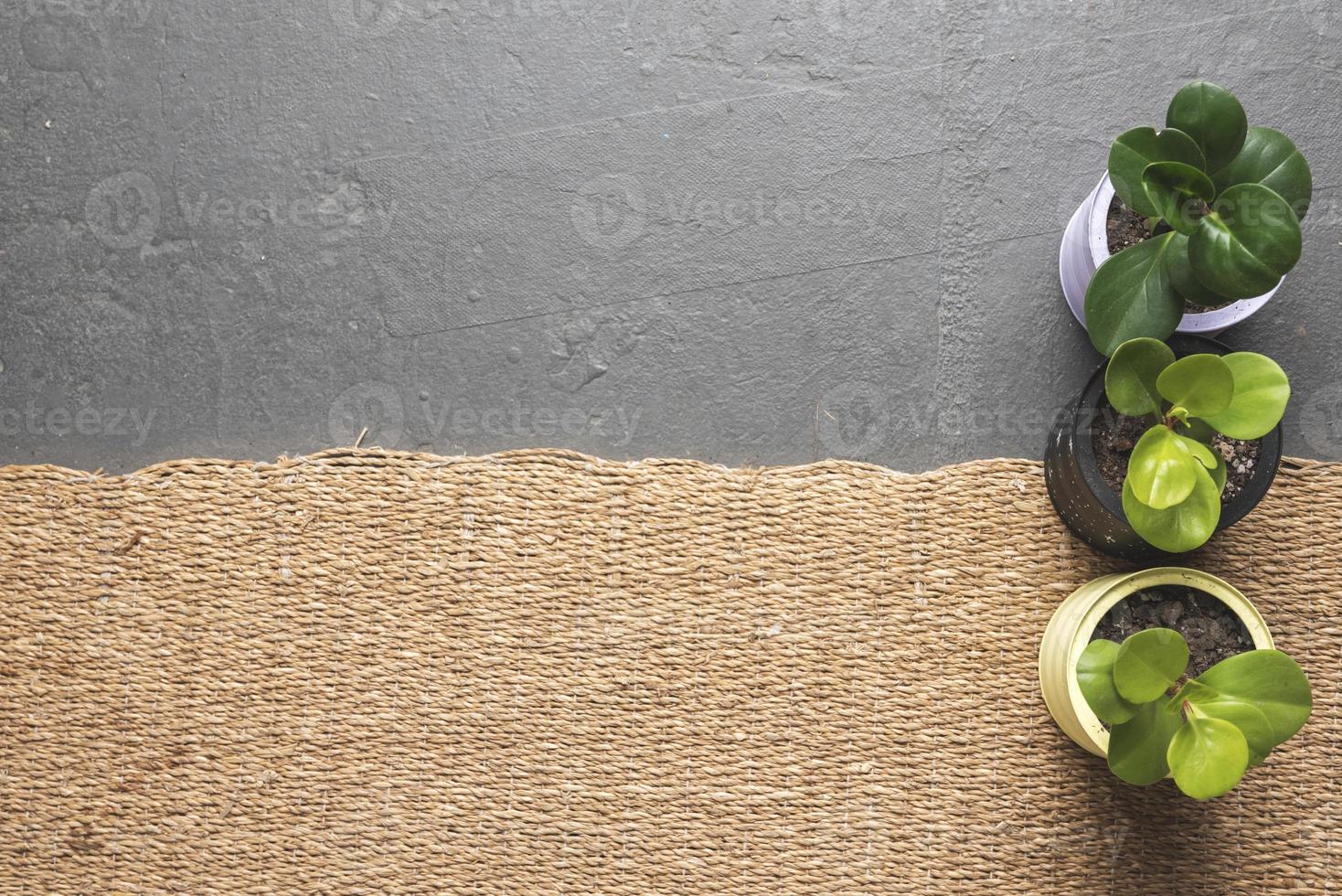 tre vasi per piante foto