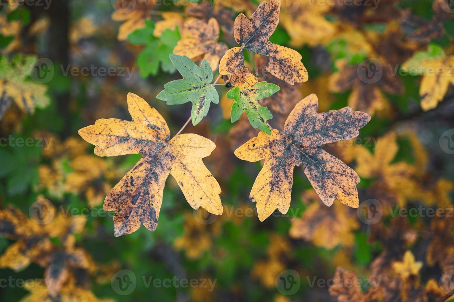foglie di albero giallo nella stagione autunnale foto
