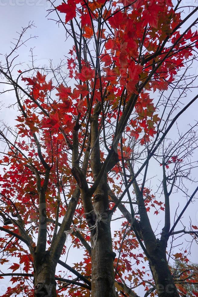 alberi con foglie marroni nella stagione autunnale foto