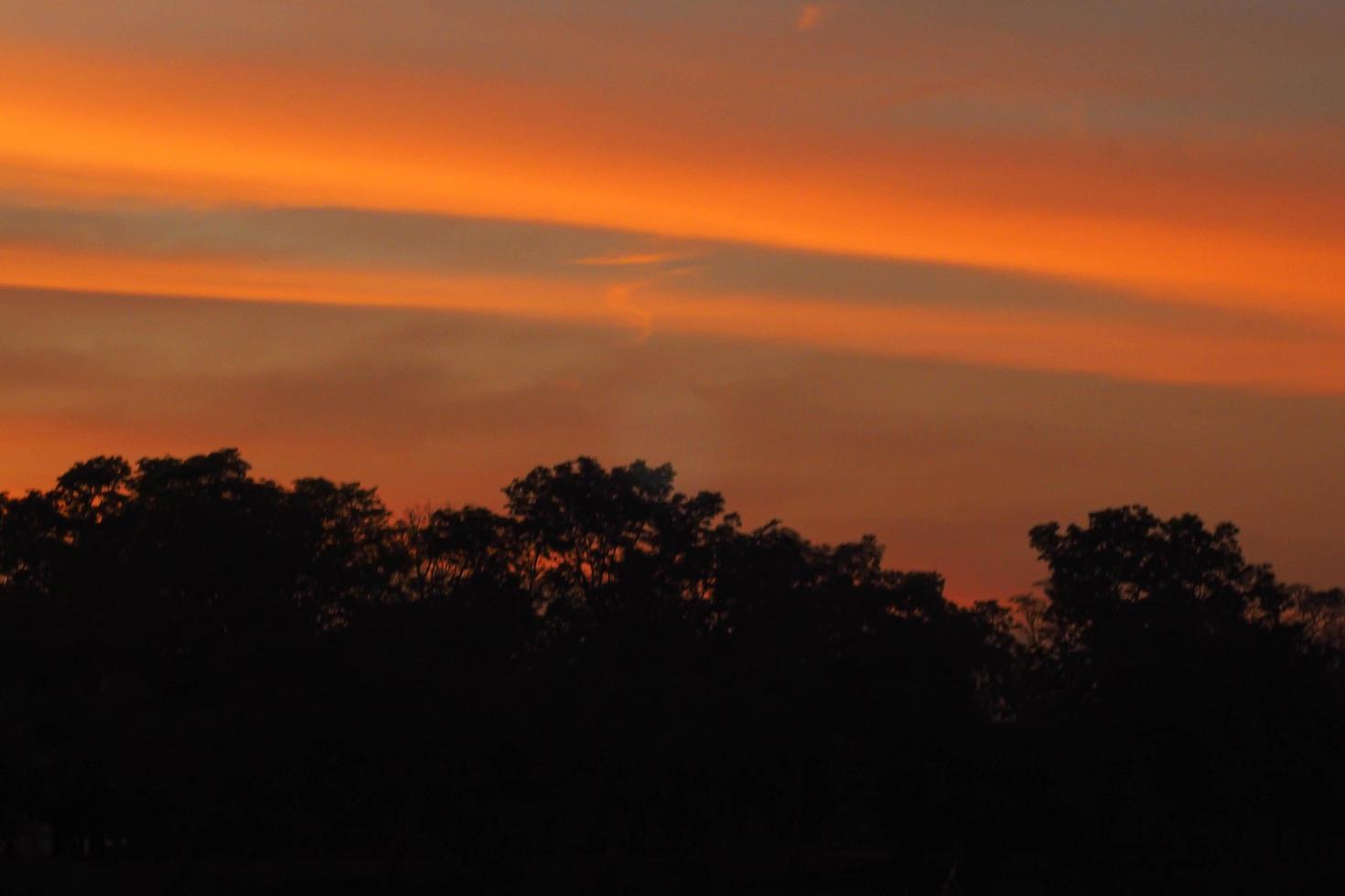 colorato cielo drammatico foresta silhouette tramonto foto