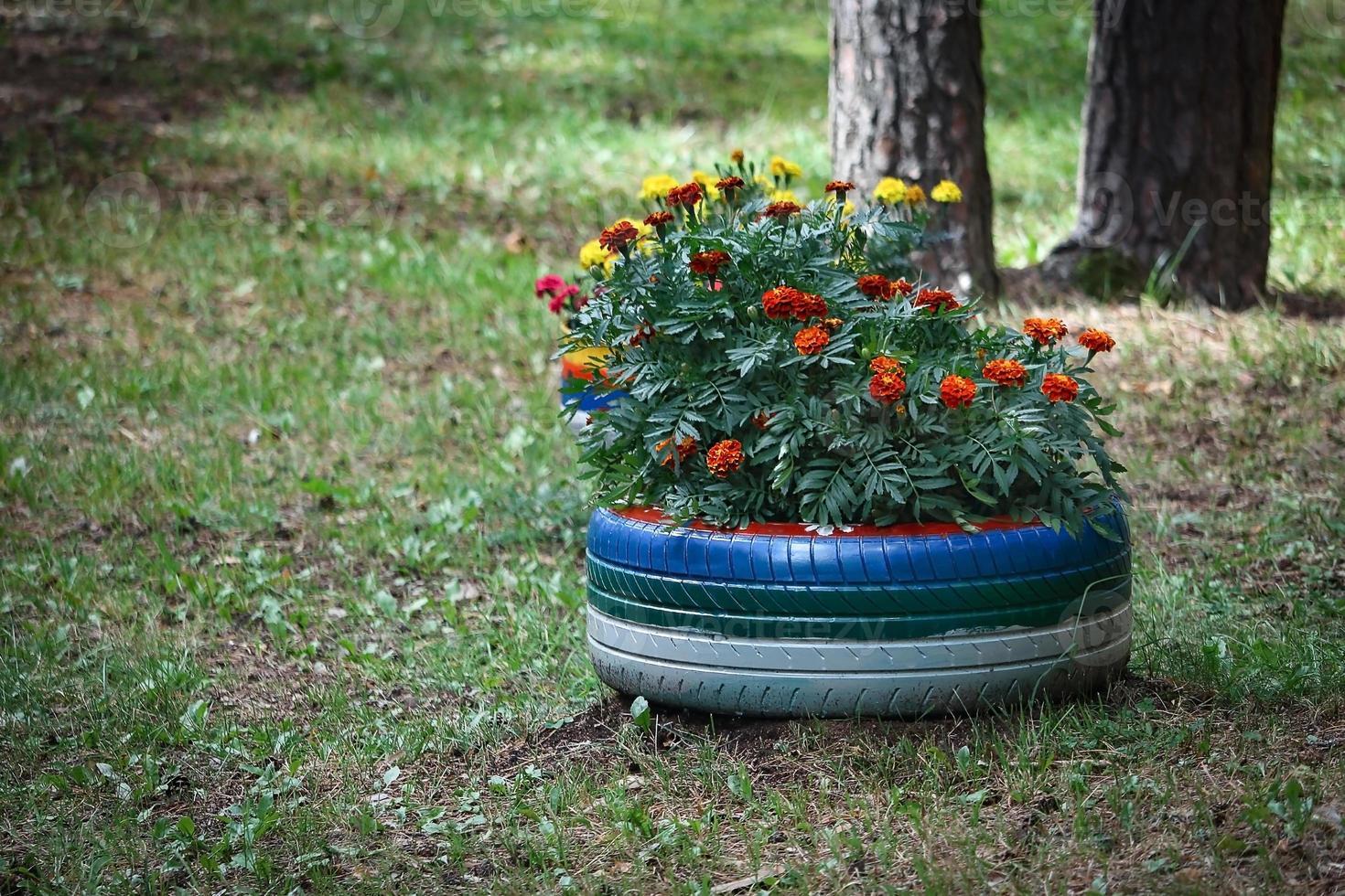aiuola estiva fatta di pneumatici e pitture blu e bianche con fiori di calendula piantati foto