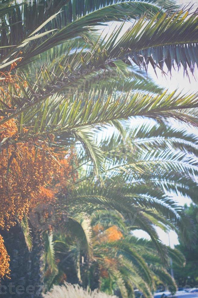 foglie di palme sullo sfondo della natura foto