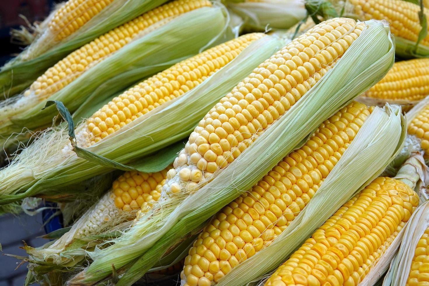 mais vegetale crudo biologico foto