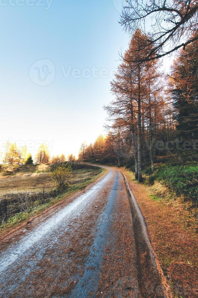piccola strada di montagna con colori autunnali e aghi di pino per terra foto