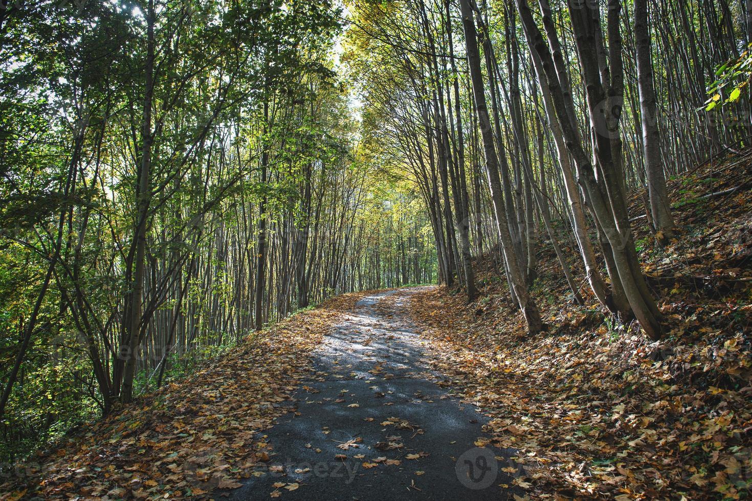 piccola strada di montagna in autunno con foglie cadute dalle piante foto