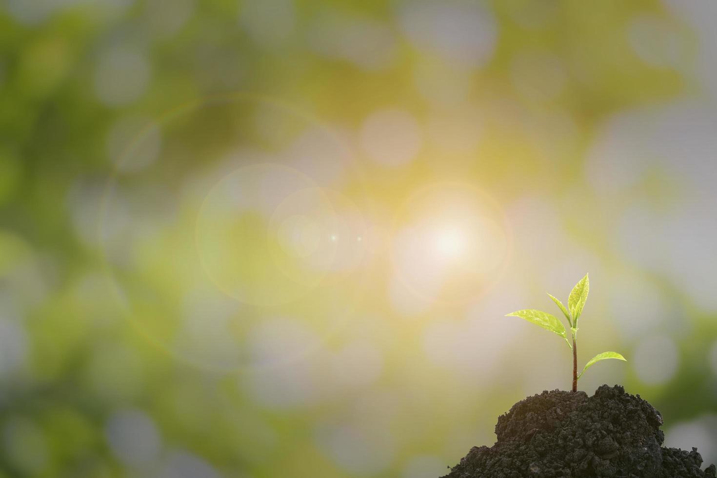 alberello di un albero che emerge da un tumulo con una bella luce solare. foto