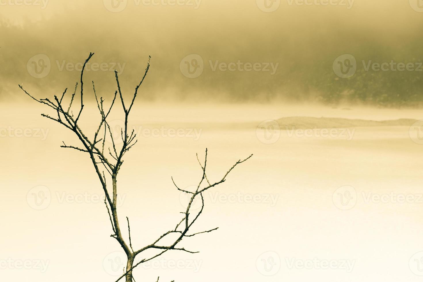 Lago nebbioso e ramo di un albero tono diviso foto