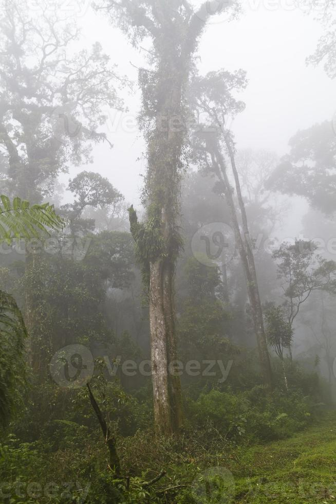 vista sulla foresta nebbiosa foto